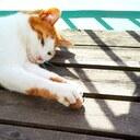 🐾猫の居る暮らし🐾