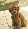 愛犬愛するあまりお庭改造計画【途中経過】芝剥ぎ編