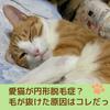 【愛猫が円形脱毛症?写真あり】原因は病気かストレスか診てもらった