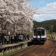 のと桜駅(能登鹿島駅)で花見