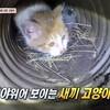「排水溝に落ちた子猫を救出」(TV動物農場)