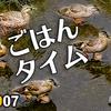 0907【カルガモ親子の餌奪い合いがかわいい】ハトが脚を滑らせる。スズメの大群。ヒガンバナ成長。台風10号【今日撮り野鳥動画まとめ】身近な生き物語