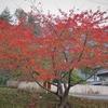 2011年の東北 岩手県大槌町の秋
