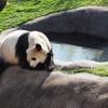 2020年1月 近畿【4/9】アドベンチャーワールドは動物園と水族館のいいとこどりで最高だった!