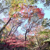 紅葉シーズンの最後を飾る日長神社の紅葉谷
