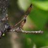 未分類のイモムシ・毛虫