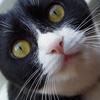 今日の黒猫モモ&白黒猫ナナの動画ー1010