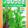 ヌルヌル野菜の「ツルムラサキ」を水耕栽培。支柱なしの放任状態で育てる予定です