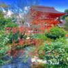 【京都最古の歴史】上賀茂神社で絶対知っておきたいオススメスポットとは?