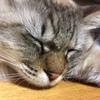 スリランカカレー + 猫2匹 = 至福の時間♡