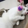 モンちゃん感激!猫の癒しグッズ発見、購入!