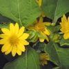 我が家の庭に追加花々