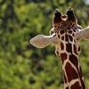 子連れには絶対おすすめ!!神戸の王子公園動物園