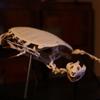 すっぽんの骨格標本、完成!