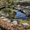 道の駅 紀の川万葉の里の池(和歌山県かつらぎ)