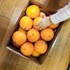 コストコ購入品|おすすめの商品を管理栄養士が解説【2019年2月版】