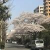 日本橋浜町・人形町の桜2018(後、上州の桜を少し)