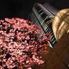 サクラ満開の東京を撮る2018。1日目後編(上野→赤坂→六本木)【2018.3.24】