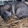 野犬の子11匹を保護しました