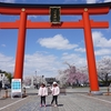 ✅桜🌸満開