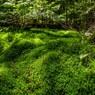 北八ヶ岳白駒池周辺を45年ぶりに散策してきた
