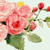 花の水彩イラスト バラと木苺