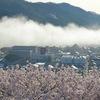 尾関山公園の桜 ~広島県中部の花見の名所~