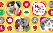 ネコ英語「Happy にゃー Year」