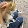 仔犬と暮らす・・散歩の情景と、未知との遭遇。。
