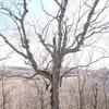 シンギングリンクリアリング&チャクラハミング瞑想会御礼と、釧路 武佐の森の笹刈りボランティア