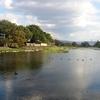江津湖の11月−カモ来訪