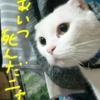 【MHXX】G級、リオレイア討伐!!