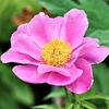 季節の花(令和三年五月 3)