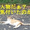 社会福祉士ぞぽぞぽ合格作戦~人物序論~
