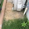 最強除草剤はこれ!根まで枯らすのに安全!!