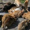 伊予灘に浮かぶ「猫島」、青島に行ったので写真を貼っていくよ