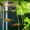 新しい熱帯魚をお迎え「魚ごっこ」を聴いた