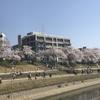 【お題記事】「岡山さくらカーニバル」に今年も行ってきた
