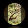 台風19号の影響にビビりながら京都を観光 ④(泉涌寺とかとか)
