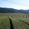 茶畑の四季