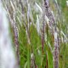 5月の野草たち