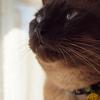 猫も肥ゆる秋