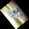 Pillow (PIL) - 画像を回転、反転させる方法について