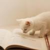 学ぶ事、勉強をする事、読書をする事