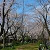千本桜に花見に行ったよ!