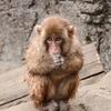 智光山公園に写真を撮りに行ってきた!動物編その1