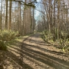 「Virtual UTMF」3日目、野幌森林公園ラン。やっぱりトレイルはいいな〜