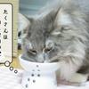 猫の病気 ~ペリアクチンの副作用~
