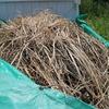 #2 「干し草」を使った苗の保護方法