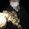 春の根魚調査 カサゴ・タケノコ・シーバス  岡崎大樹寺店